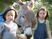 A walk in the company of donkeys